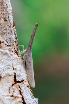 Изображение черепашки фонарика или zanna sp на дереве. насекомое. животное