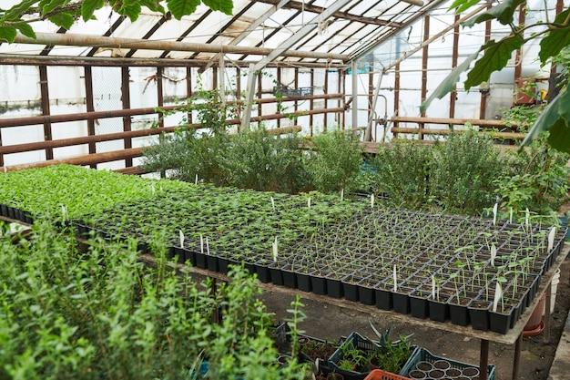 묘목과 식물이 있는 대형 온실 이미지