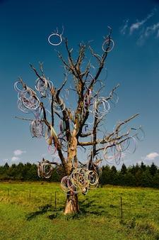 훌라후프에 덮인 큰 잎이 없는 나무의 이미지