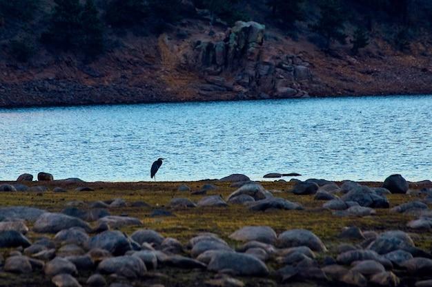 Изображение одинокой птицы голубой цапли рядом с водным озером со скалами