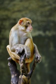 나뭇가지에 앉아 있는 원숭이의 이미지입니다. 야생 동물.