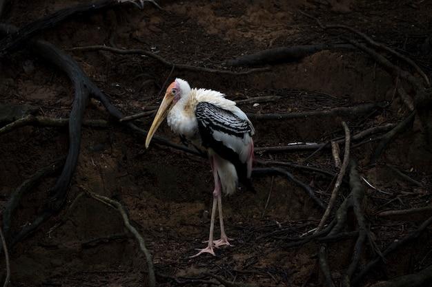 자연 배경에 그려진 황새(mycteria leucocephala)의 이미지. 야생 동물. 새,