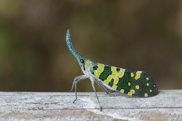 Изображение жука фонаря pyrops viridirostris или фонарика (pyrops oculata) на дереве. насекомое. animal.