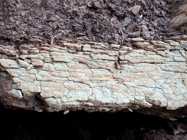 土壌の背景の画像