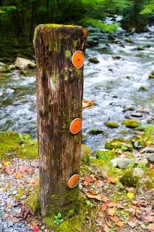 Изображение вертикального указателя с флуоресцентными оранжевыми маркерами стоит перед стремительной рекой