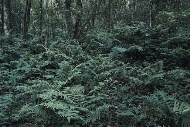 ジャングルの野生のシダ植物の画像。