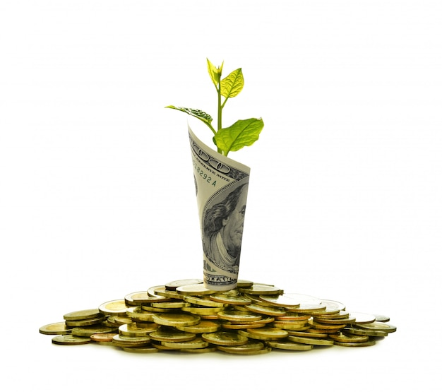 Image of pile of coins and rolled bank note with plant on top showing business
