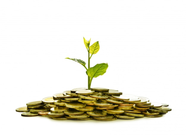 Image of pile of coins with plant on top for business, saving, growth