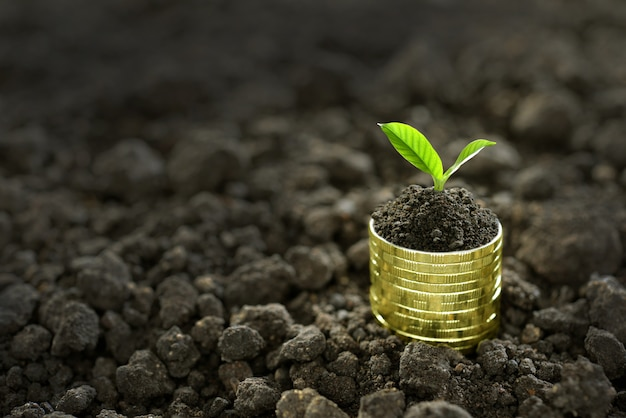 Image of pile of coins with plant on top for business