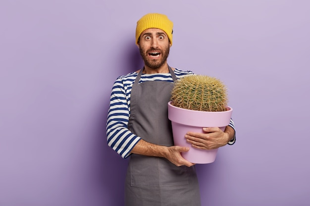 Image of puzzled unshaven man florist, carries big pot of cactus, tends houseplant growth