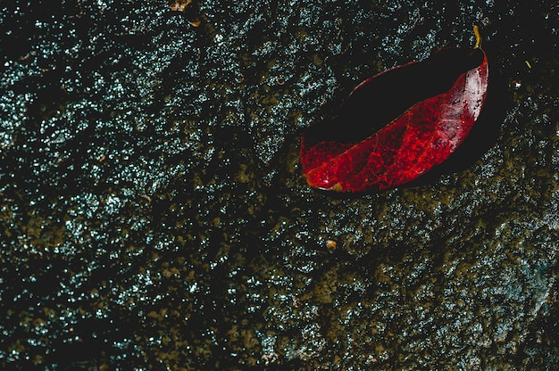 The image of red leaves under the water flowing through natural concept with copy space
