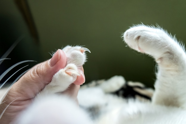 The image shows the captured cat feet before cutting the nails