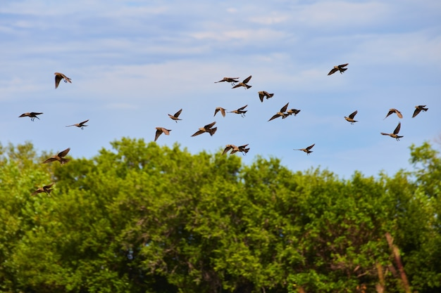 Image of small flock of tiny birds flying by forest