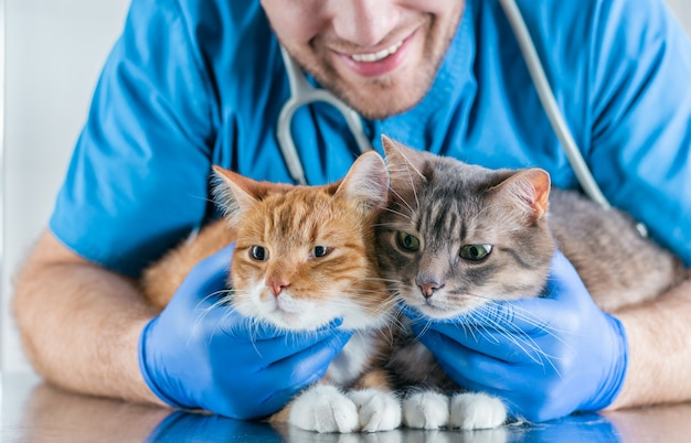Image of a smiling veterinarian embracing two cats lying on the table. veterinary medicine concept