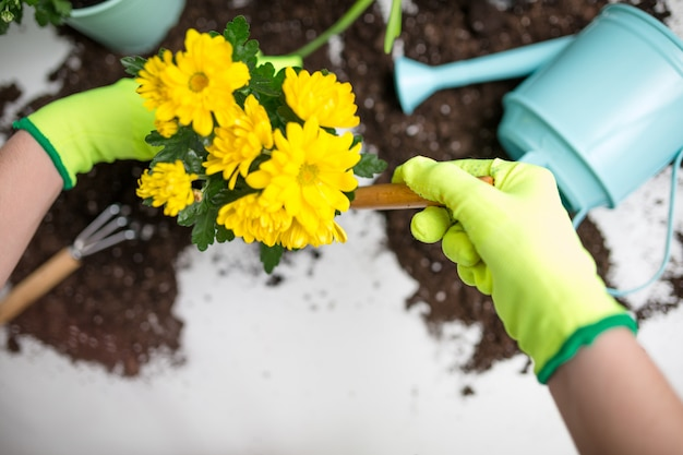 Image on top of man's hands in green gloves transplanting flower