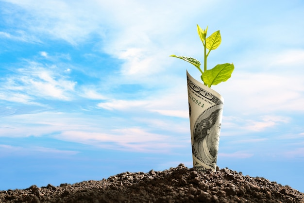 Image of us dollar bank note with plant growing on top for business