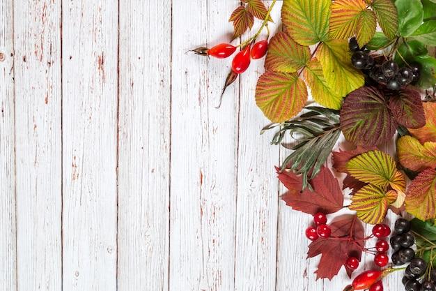 秋の紅葉のイメージ。