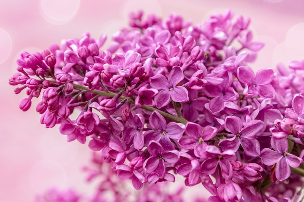 Image with a lilac.