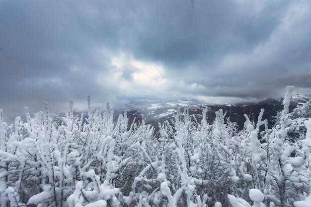 植物の枝に再び降雪した直後