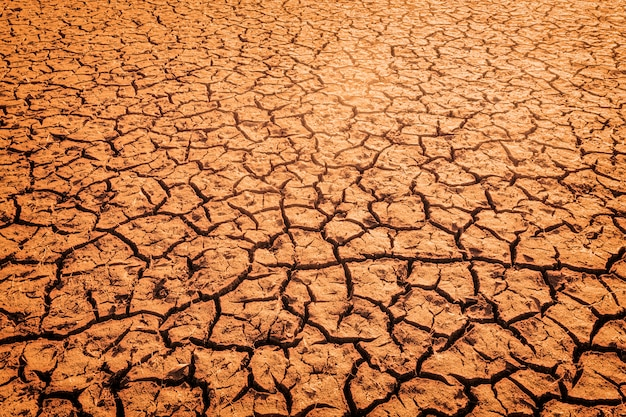 The impact of global warming on sun-cracked soil and the loss of all fauna and flora background
