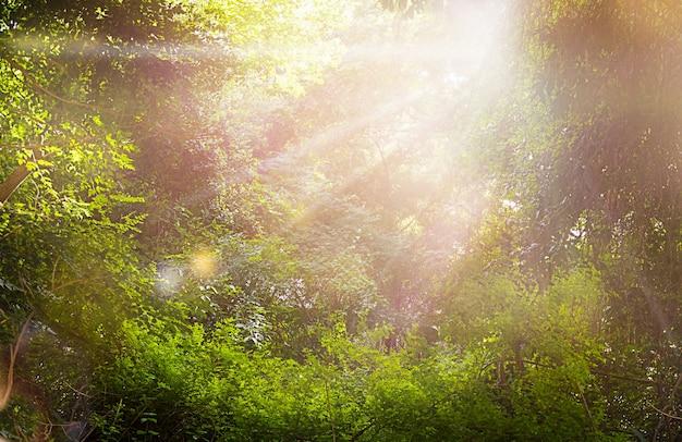 Непроходимые тропические леса с солнечными лучами пейзаж природа