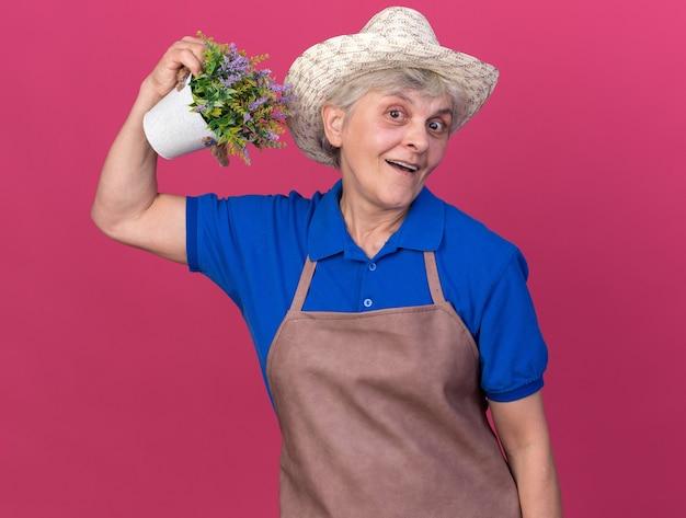 Impressionato giardiniere donna anziana che indossa cappello da giardinaggio tenendo un vaso di fiori isolato su parete rosa con spazio copia