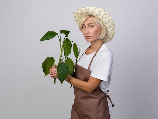 Donna bionda di mezza età impressionata del giardiniere in uniforme che indossa il cappello che sta nella pianta della tenuta di vista di profilo che esamina parte anteriore isolata sulla parete bianca con lo spazio della copia