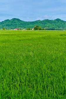 表面に山がある印象的な風景緑の水田