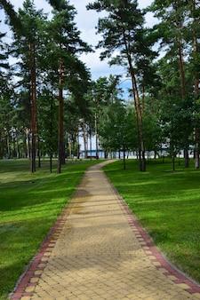 소나무 여름 숲 공원에는 넓은 기와길이 한눈에 들어온다. 푸른 하늘을 배경으로