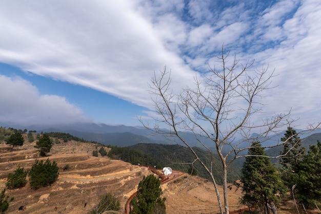 Осенью посевы и сорняки на сельских полях вянут и желтеют, а небо очень синее.