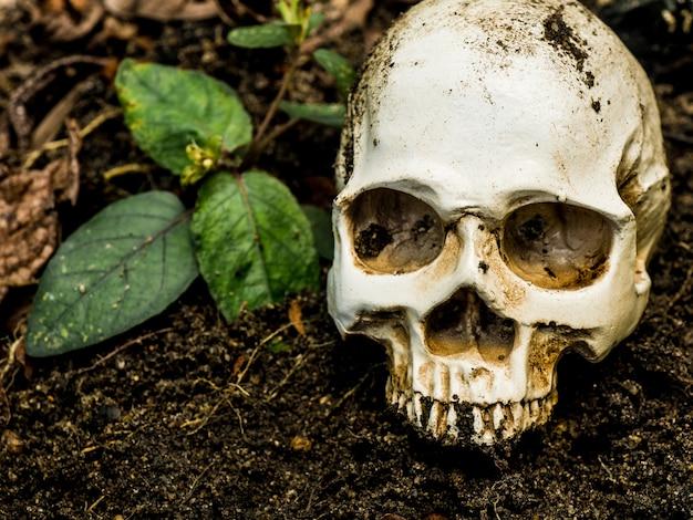 土に埋もれている人間の頭蓋の前。頭蓋骨には頭蓋骨に汚れが付いています。