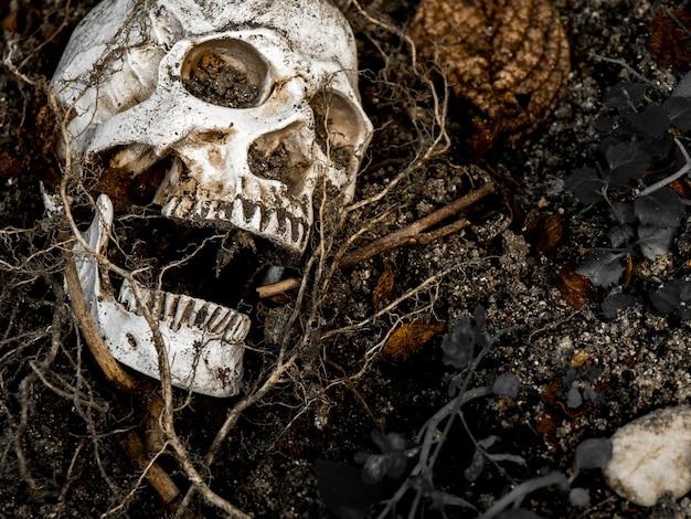 人間の頭蓋骨の前には、側にある木の根に土に埋もれています。