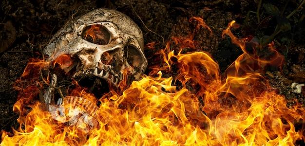 木の根を横にして土に火をつけて埋められた人間の頭蓋骨の前。頭蓋骨に汚れが付着している死とハロウィーンの概念