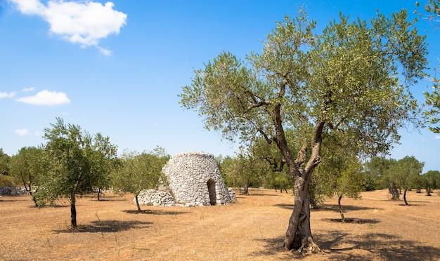 イタリア南部のサレント地域にある、地元の方言にあるfurnieddhuという名前の伝統的な田舎の倉庫。オリーブ農地にある石造りの伝統的な建物です。