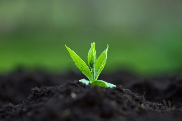 봄에는 식물이 야외에서 땅에서 싹이 트다. 새로운 삶의 시작. 영감. 앞으로 노력하고 있습니다.