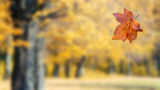 秋の森では、木から乾いた葉が落ちます