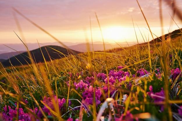 В траве. величественные карпаты. красивый пейзаж. захватывающий вид.