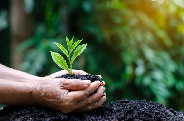 나무의 손에 묘목이 자랍니다. Bokeh 녹색 배경 여성의 손 잡고 나무 프리미엄 사진