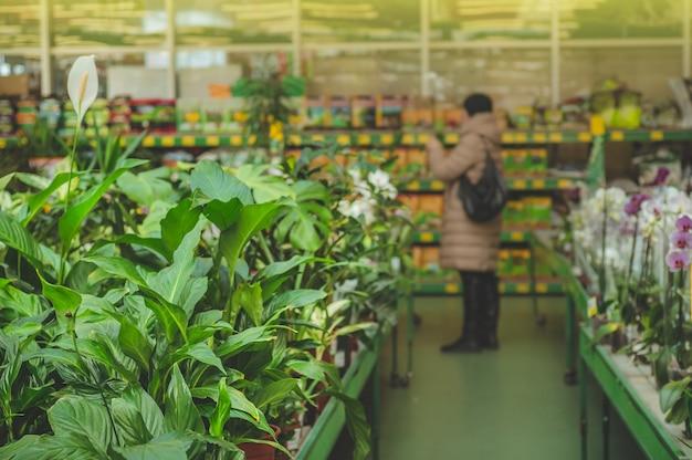 小売店では、焦点が合っていない女性が植物を取り除きます。温室でのガーデニング。植物園、花の栽培、園芸産業のコンセプト