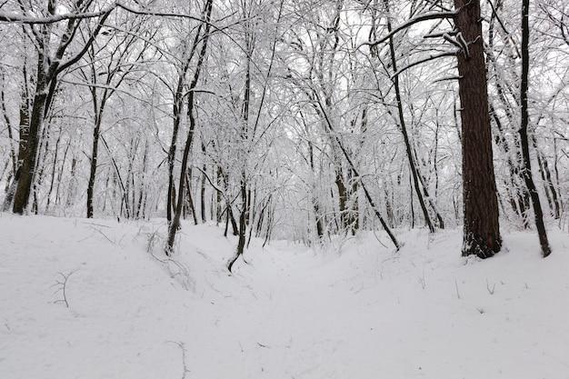 雪の中、冬の落葉樹、降雪や霜が降りた後の自然の寒い冬の天候、公園での降雪後のさまざまな品種の落葉樹