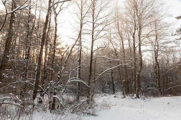 В снегу, лиственные деревья в зимний сезон, холодная зимняя погода на природе после снегопадов и заморозков, лиственные деревья разных пород после снегопада в парке