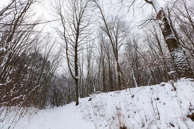 雪の中、冬の落葉樹