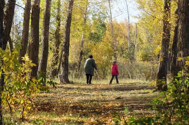 きのこの森の中 Premium写真