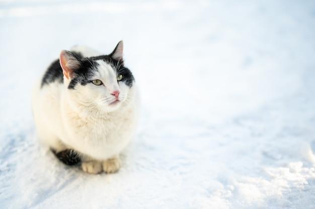 겨울에는 길 잃은 고양이가 야외에서 얼어 붙습니다. 버려진 동물이 눈 속에 앉는다. 초상화 버려진 고양이 얼어 붙은 거리