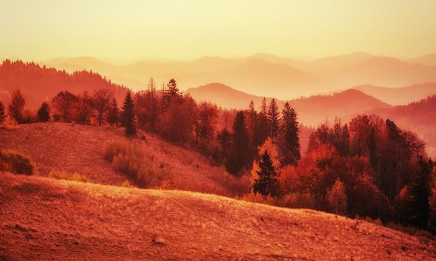 秋の晴れた日の午後の白inの森。