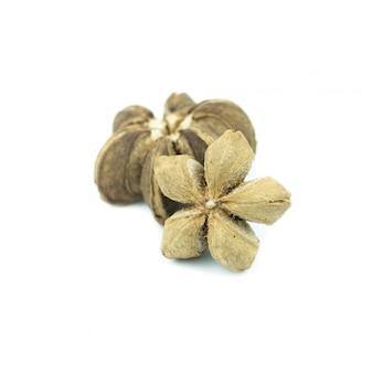 白で隔離されるサチャinchiピーナッツの種