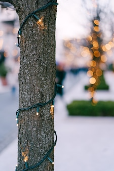 外の木の幹にクリスマスの花輪が含まれています。公園の新年の街灯。お祝いのライト。小さな電球が背景のボケ味でクローズアップ。高品質の写真