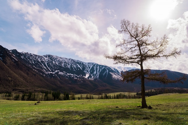 Incredible landscape of a tree standing on the background of the peaks of the altai mountains and running clouds.