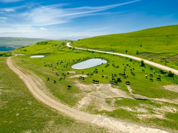 Incredibly beautiful aerial view landscape green meadows fields trees cows and horses graze in the meadow near the lake wild natureâlandscapeâfieldsâdesktop wallpaper