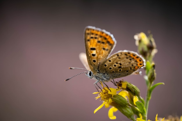 Incredibly beautiful butterfly on a yellow flower close up